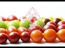 楽しく「食」を学べる機会を創りたい ー「食と農」で健康を考えるプロジェクトが始まる